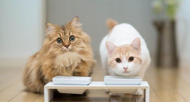 gatti migliore cibo secco