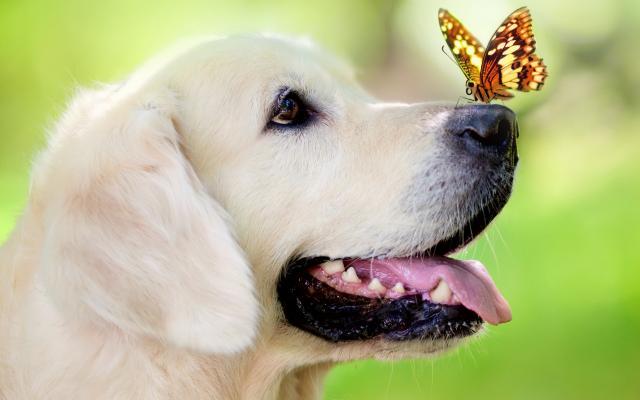 Foto Malassezia nel cane:  sintomi, diagnosi e trattamento