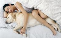 sogni con cani