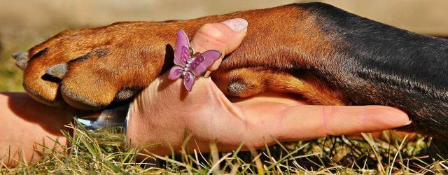 sintomi leishmaniosi cane