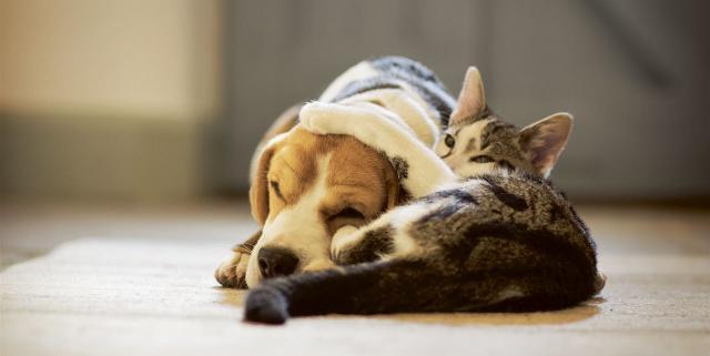 vaccino trivalente gatto