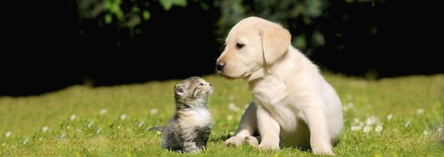 vaccinare gatto