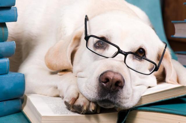 Foto Il tuo cane è intelligente? Scoprilo con questi 5 test