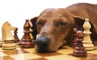 test intelligenza nel cane