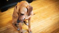 Foto Il cane è nervoso: perchè?