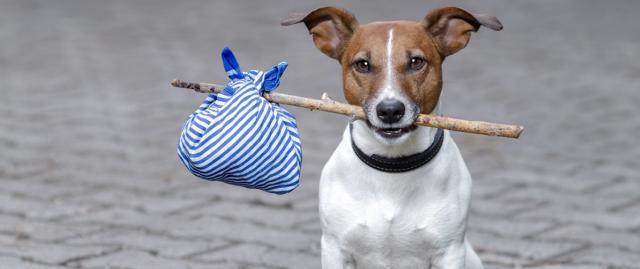cane scappato