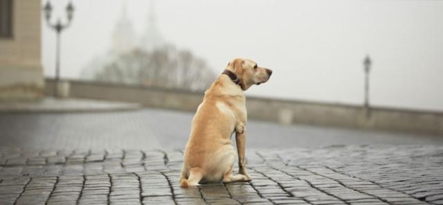 cane smarrito