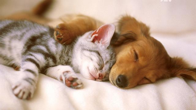 sedativi cani ansia
