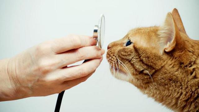 gatto tossisce