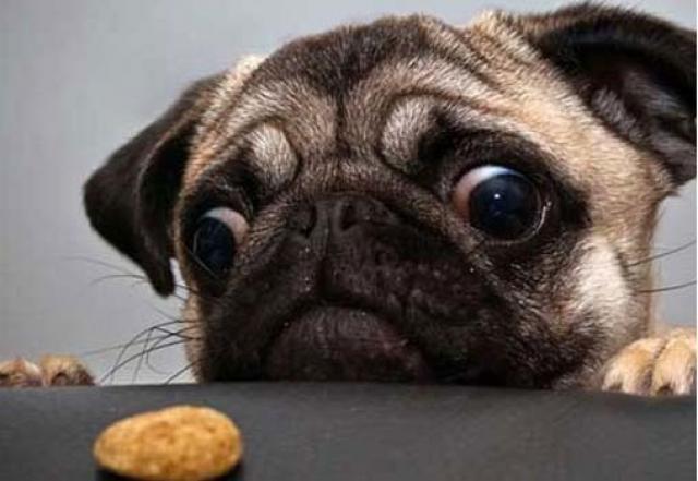 cane non ha fame