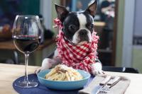 Foto Il cane può mangiare la pasta?
