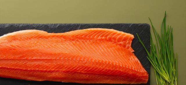 salmone per cani