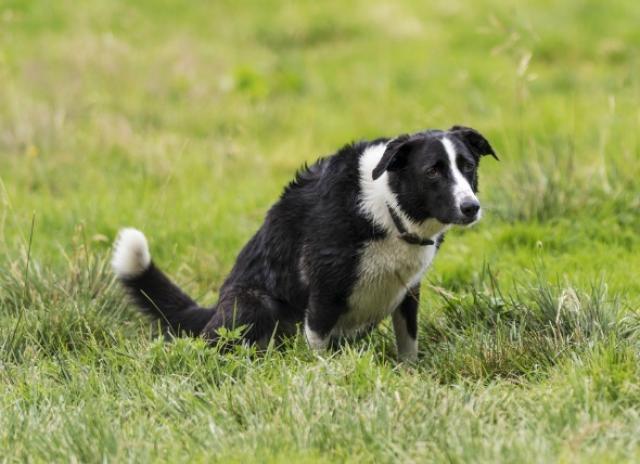 Foto Il mio Cane ha problemi a urinare (disuria)