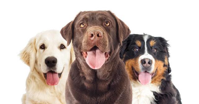 Foto Pepto-Bismol - Farmaci per Cani