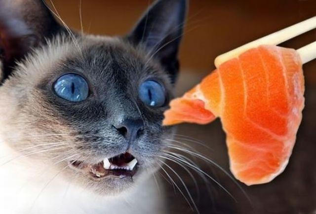 Foto Il Gatto può mangiare salmone?