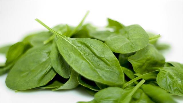 spinaci per cani