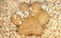 biscotti avena per cani