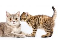 gatto fa puzza