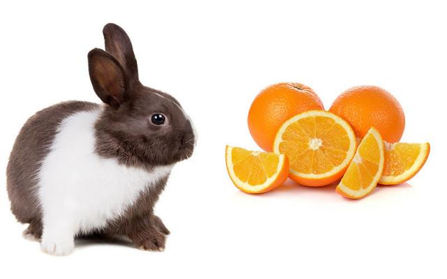Foto Il Coniglio può mangiare arance?
