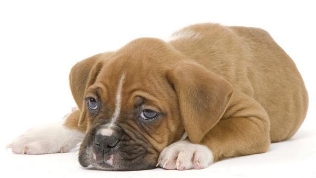 cucciolo diarrea rimedi