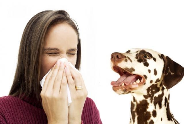 Foto Come capire  se siete allergici al cane