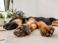 Foto 5 cause di diarrea nel cucciolo