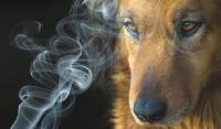 Foto Problemi del fumo passivo nel Cane