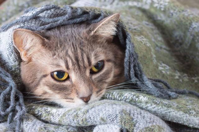 Foto Vermifugo per gatti: alcuni consigli