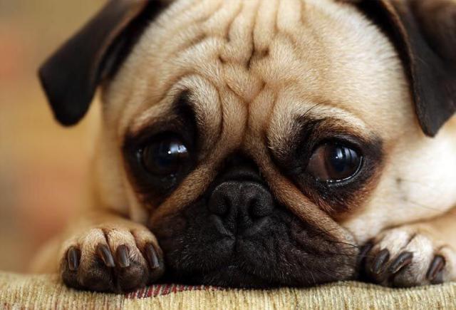 Foto I cani piangono?
