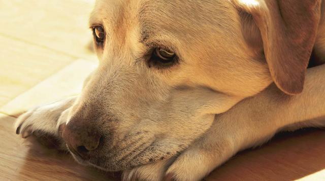cane piange di notte