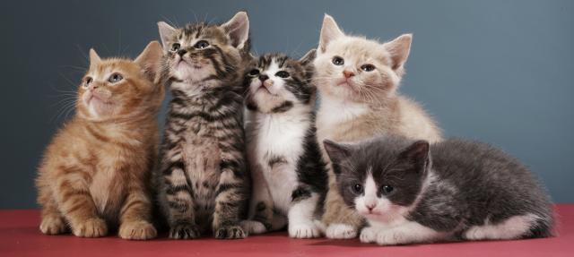 gattini cuccioli