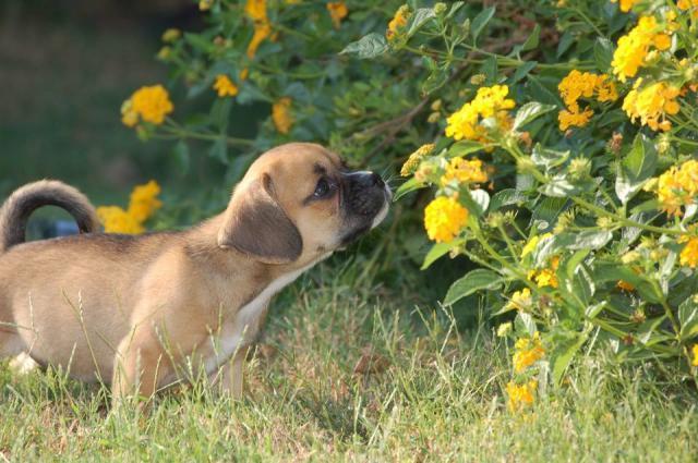 Foto Repellenti per allontanare i cani