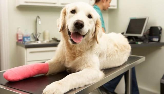 disinfettante per cani