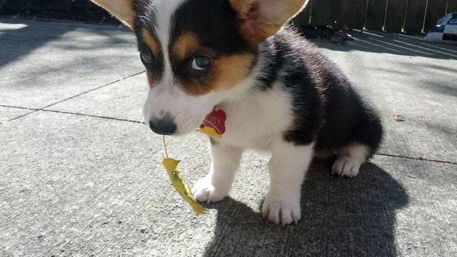 Foto Perchè il cane rigurgita?