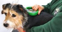 come impiantare microchip al cane
