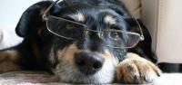 cani più longevi