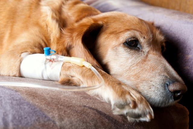 Foto Cancro nel Cane: i sintomi più comuni