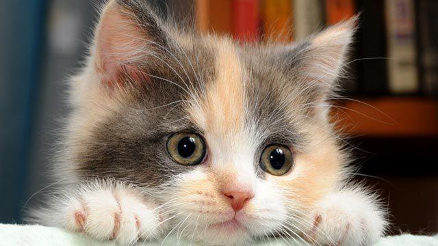 Foto Probiotici per Gatti: alcuni consigli