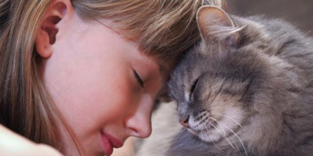 probiotici per gatti
