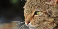 tipi di probiotici per gatti