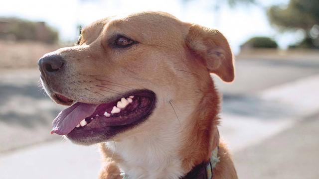 Foto Pulizia denti cane: quanto costa?