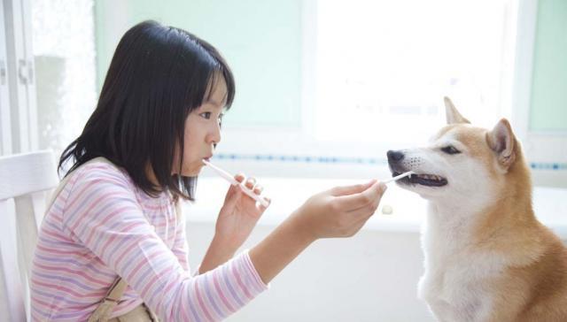 pulizia dentale cane