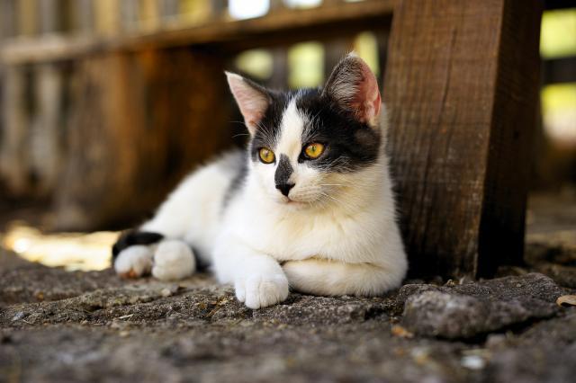 Foto Quanti anni vive un gatto?