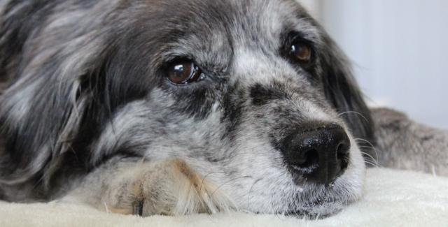 cane anziano cura