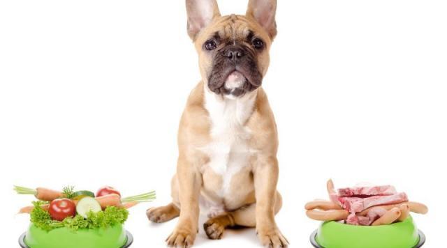 requisiti di dieta per cani senior