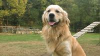 Foto Probiotici per cani: alcuni consigli