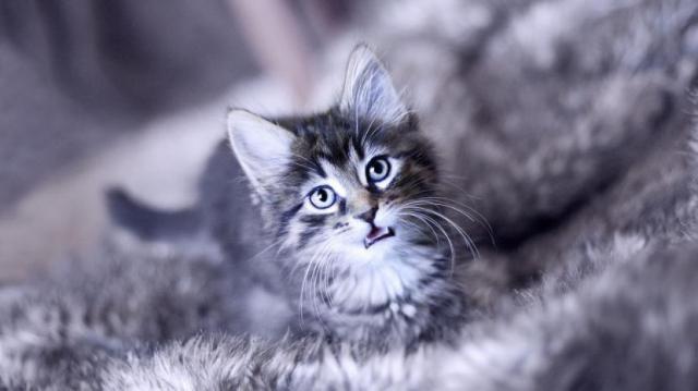 Foto Perchè il mio gatto piange?