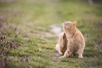 Foto Malassezia nel gatto: sintomi, diagnosi e trattamento