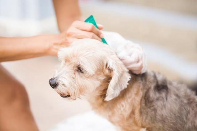 Foto Migliori pipette per Cani: alcuni consigli