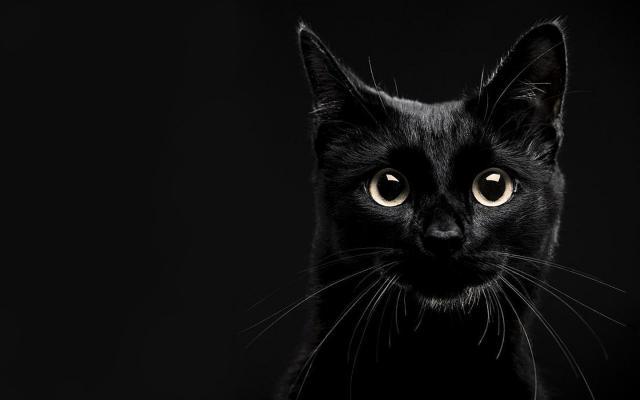 Foto Gatto nero: razze e simbologia